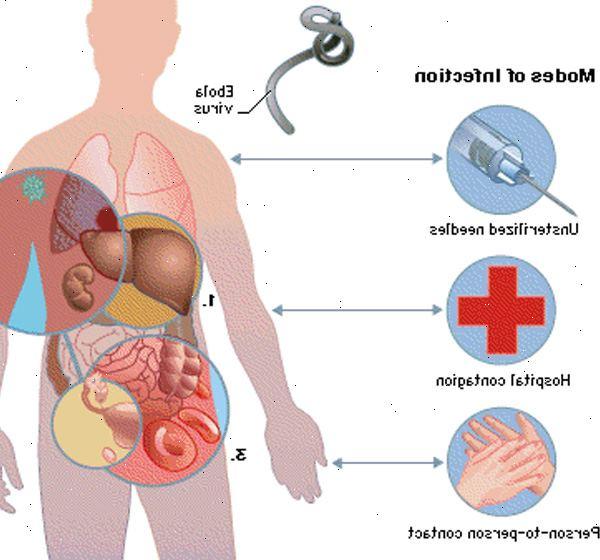 O vrus ebola e marburg vrus payro ebola e vrus de marburg transmisso de animais para humanos reheart Images
